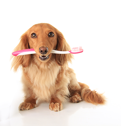 image for February is Pet Dental Month!